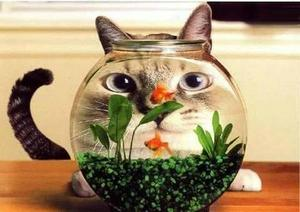 Kitty_and_fishbowl